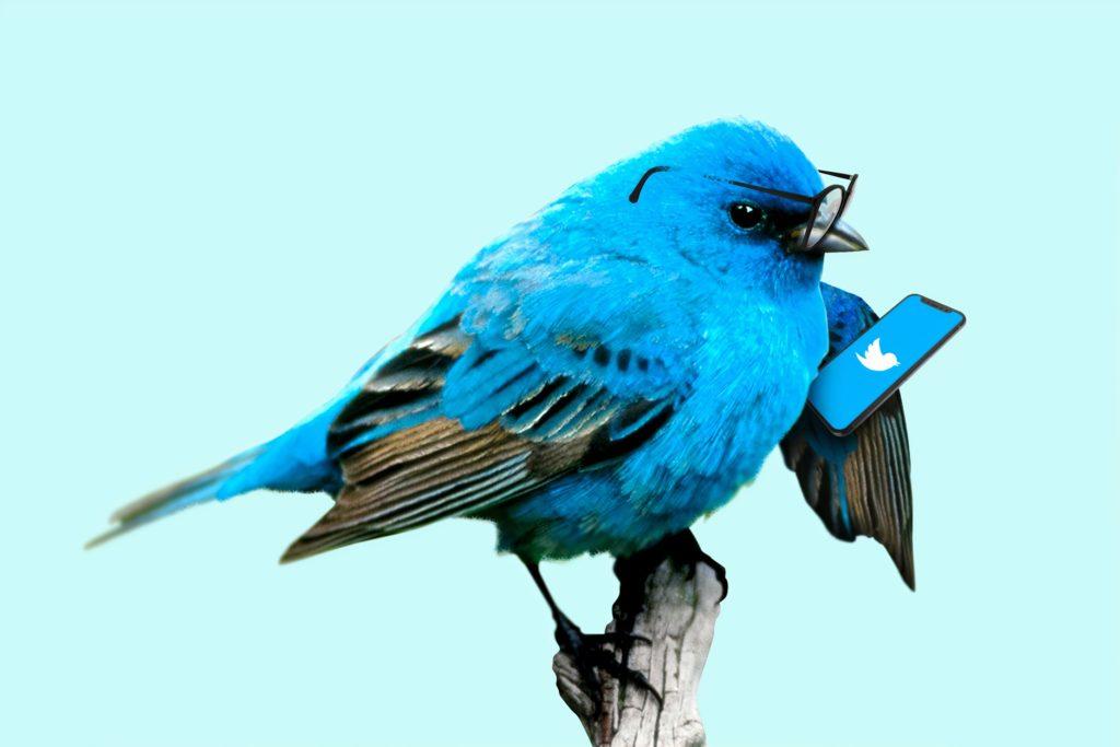 Twitter広告の事例